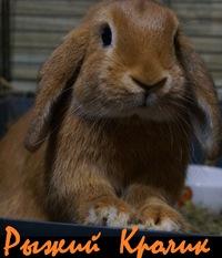 логотип компании Рыжий Кролик